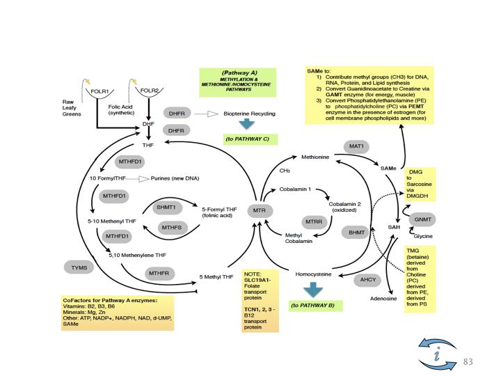 Introduction to Nutrigenomics.083.jpeg