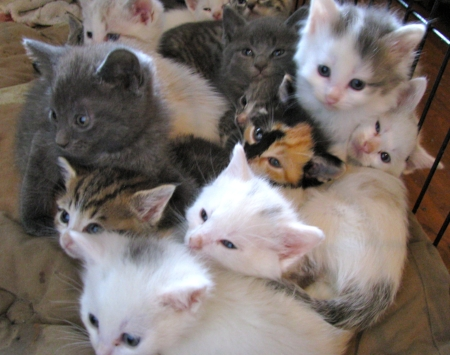 kitten-rescues (2).jpg