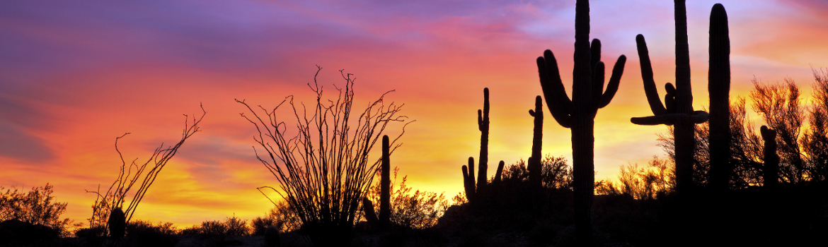 From the Catalina Foothills we are proud to serve the Greater Phoenix Area, Tucson, and all of Arizona.