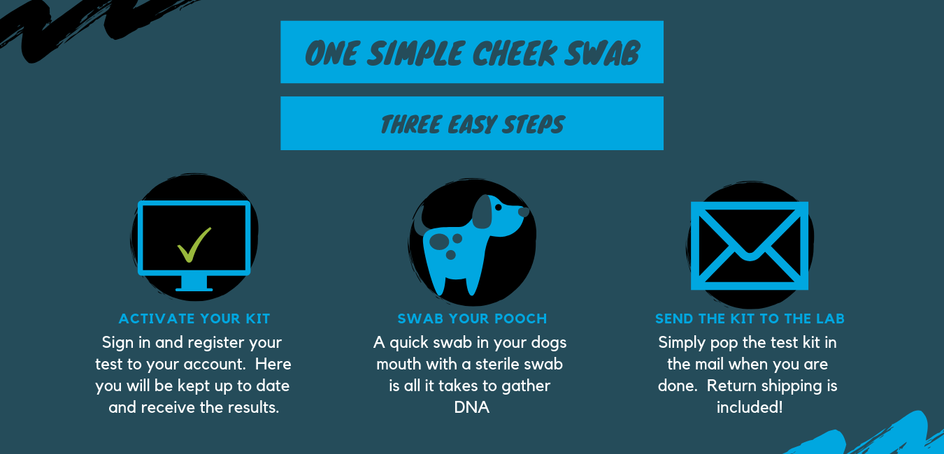 Full Dog DNA Report - Three Easy Steps - Activate, Swab, Return