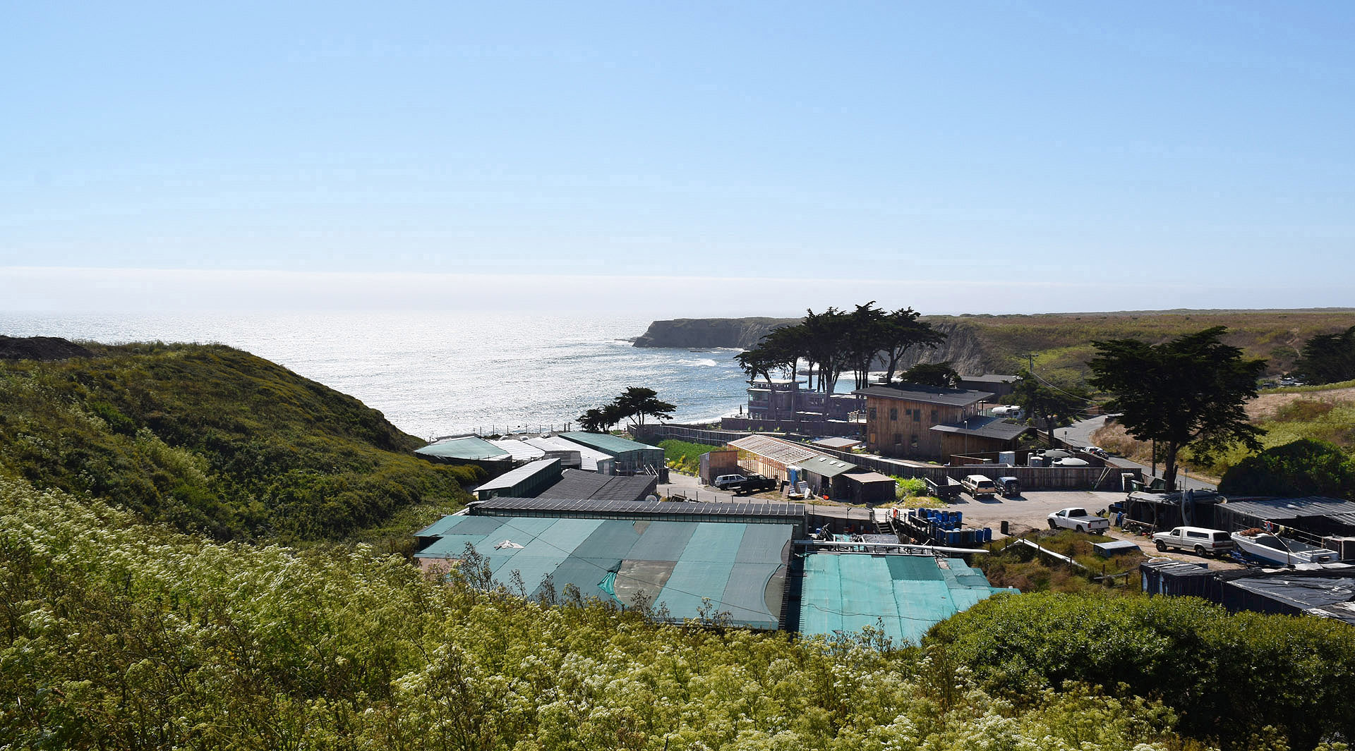 Thank you KQED for this great shot of the AAF farm in Davenport:https://ww2.kqed.org/bayareabites/wp-content/uploads/sites/24/2017/07/American-Abalone-Farms-BAB.jpg