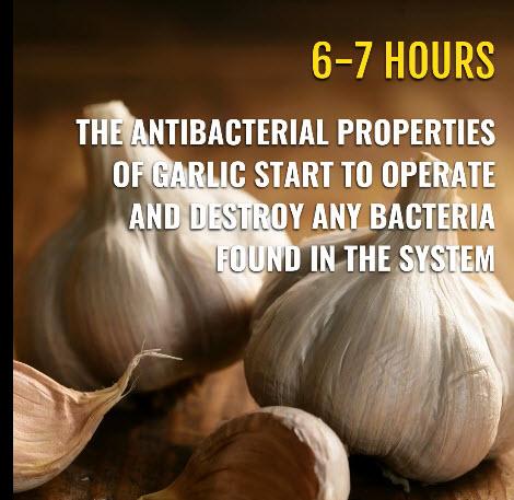 garlic 5.jpg