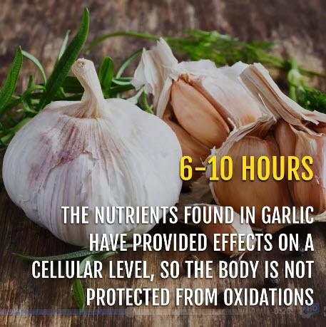 garlic 6.jpg