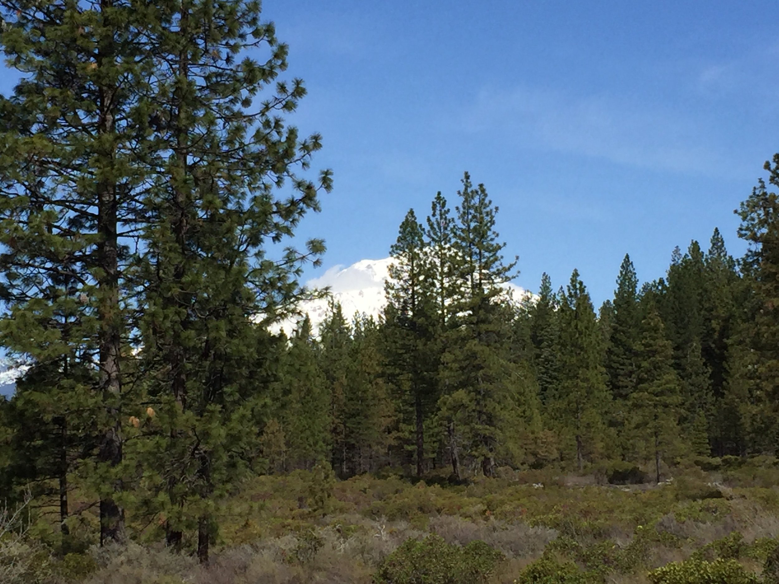 View of Mount Shasta from McCloud Falls
