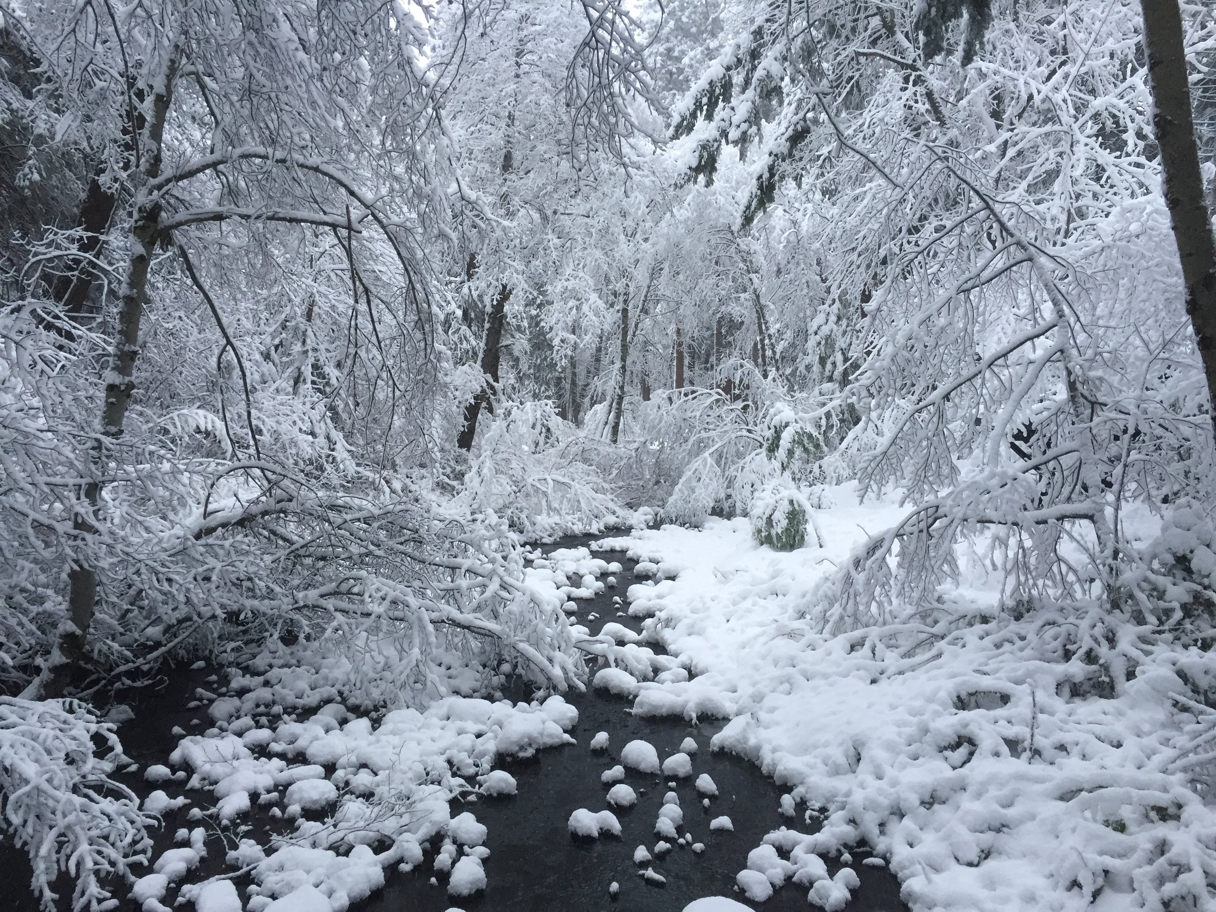 Winter Snow Wagon Creek on Property Energy is Everything EIE dot com