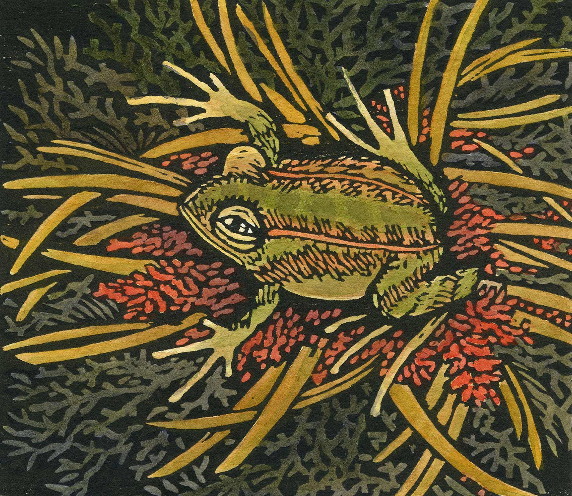 FrogOftheYear.jpg