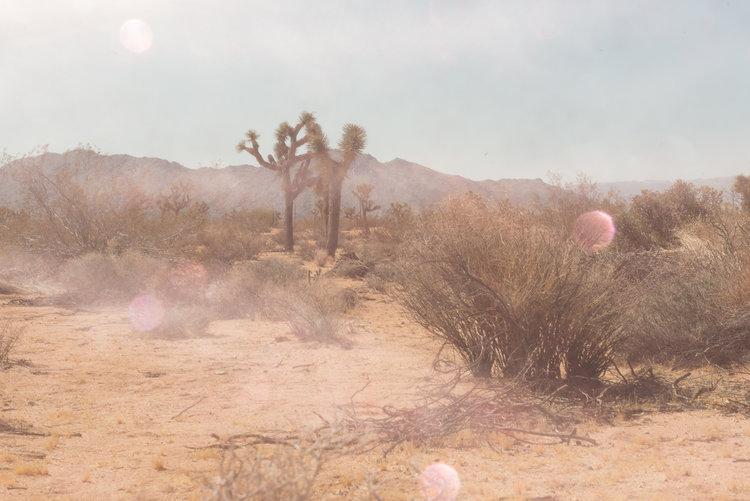 Mystic+Desert+1-60x40.jpg