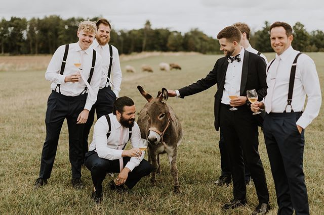 The best pictures always include a donkey . . . . . #weddingplanner #eventplanning #outdoorceremony #bluemountains #georgianbay #summer #beautiful #engagement #events #love #bestdayever #engagementparties #collingwood #traditional  #floral #fall #couples #bluemountains #donkey #donkeyoftheday
