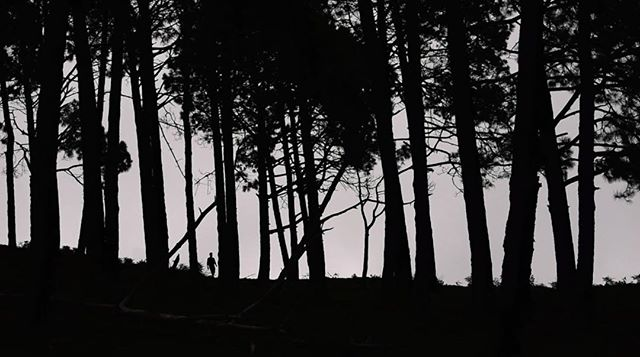 "Screenshot from the upcoming video by @cross_of_changes for the song ""Same Waves"". @flau__ #flaurecords #samewaves #tree #trees #forest #silhouette #black #naturephotography #india #musicvideo"