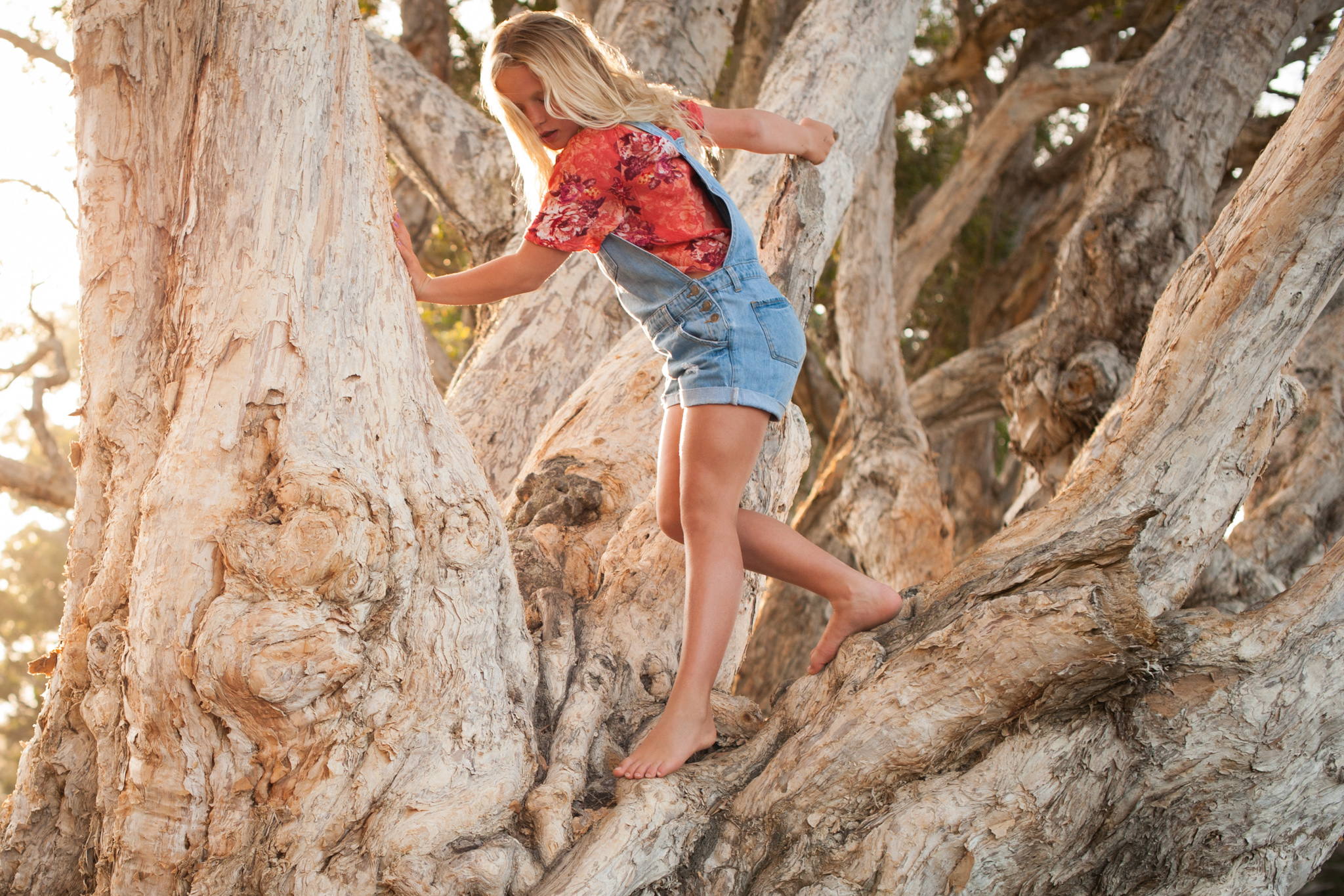 central coast family photographer tree climbing avoca beach