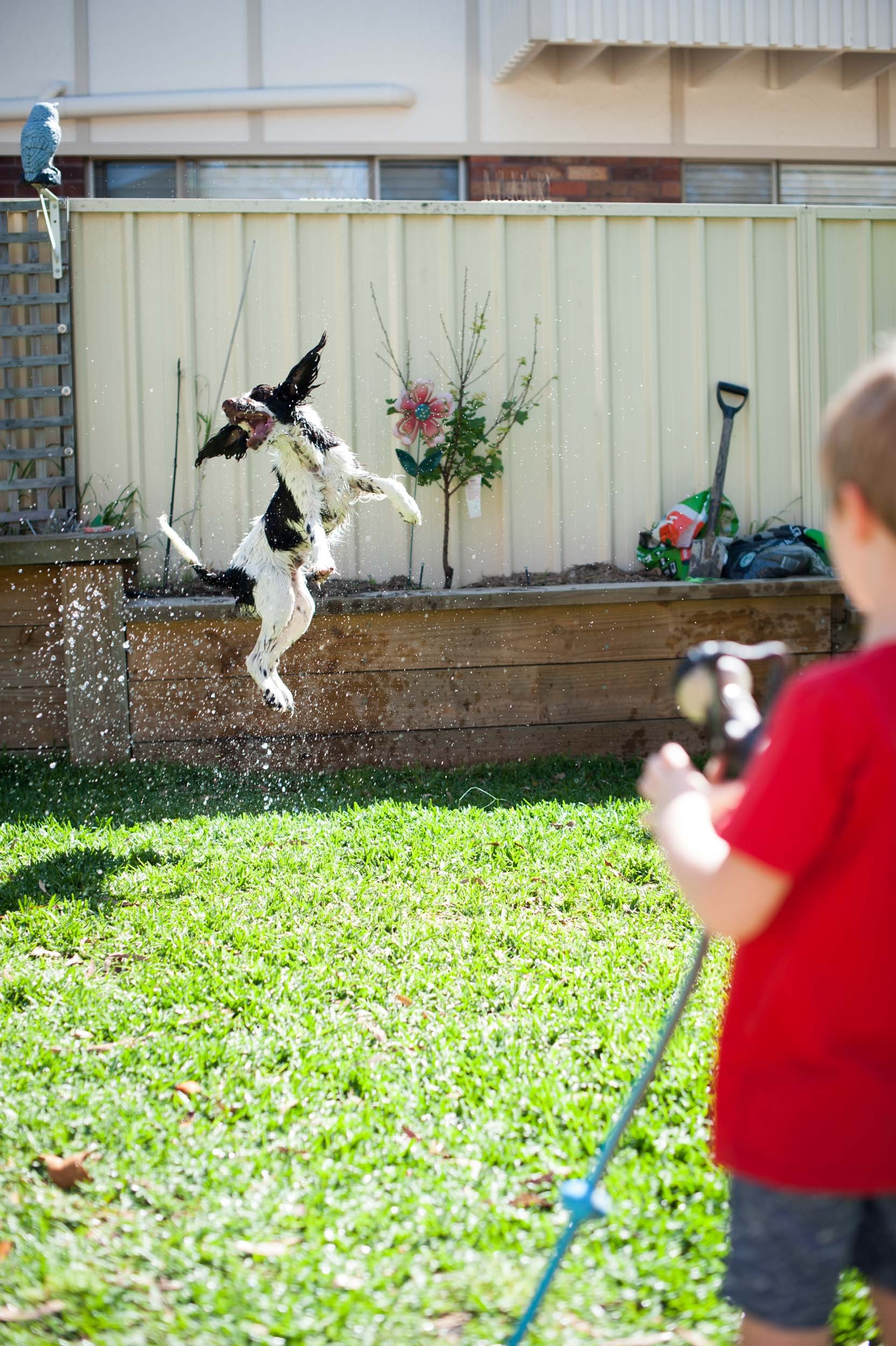 dog playing under the hose