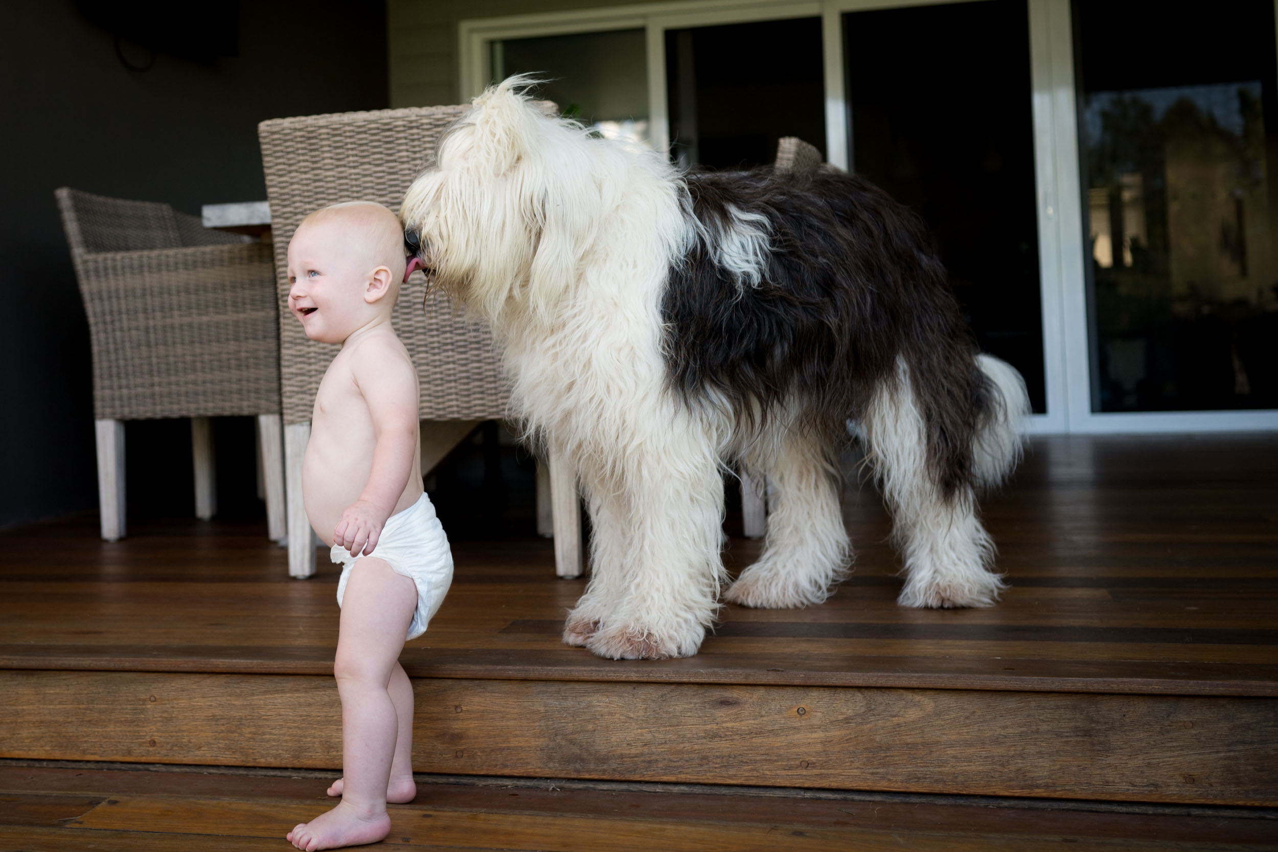 toddler and his dog woy woy nsw in home family photos