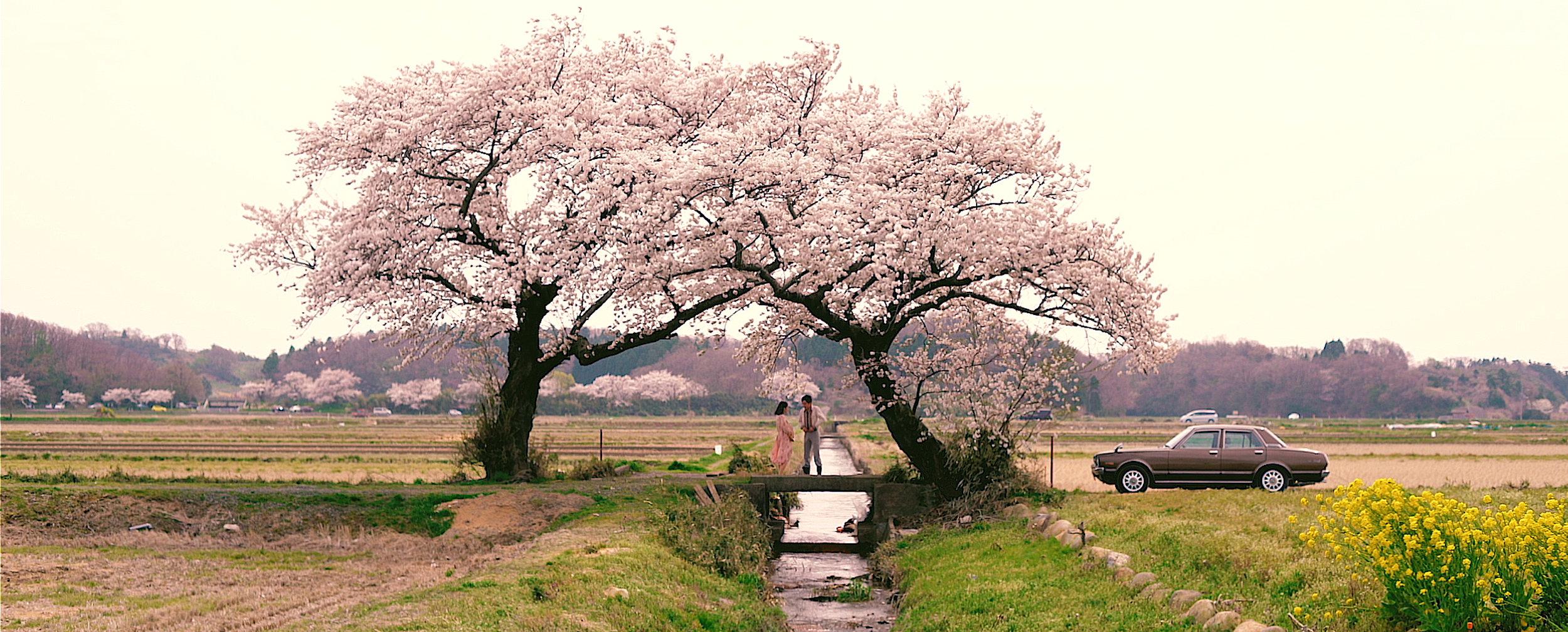 hamonika_spring_images3.jpg