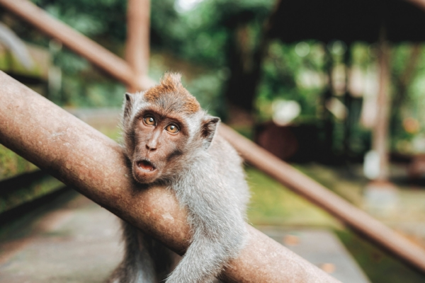 Feel like this monkey?  Photo by  Jared Rice