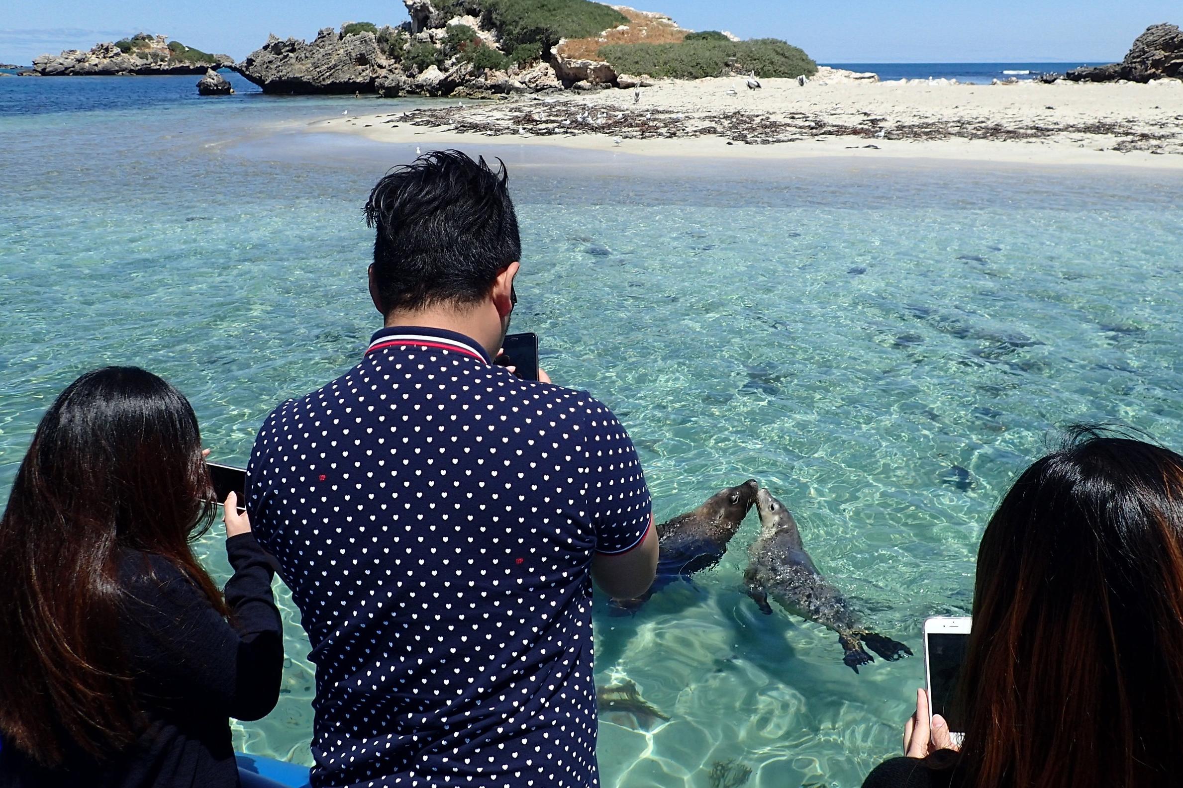 Dolphins Penguins & Sea Lion Adventure Cruise (14) copy.jpg