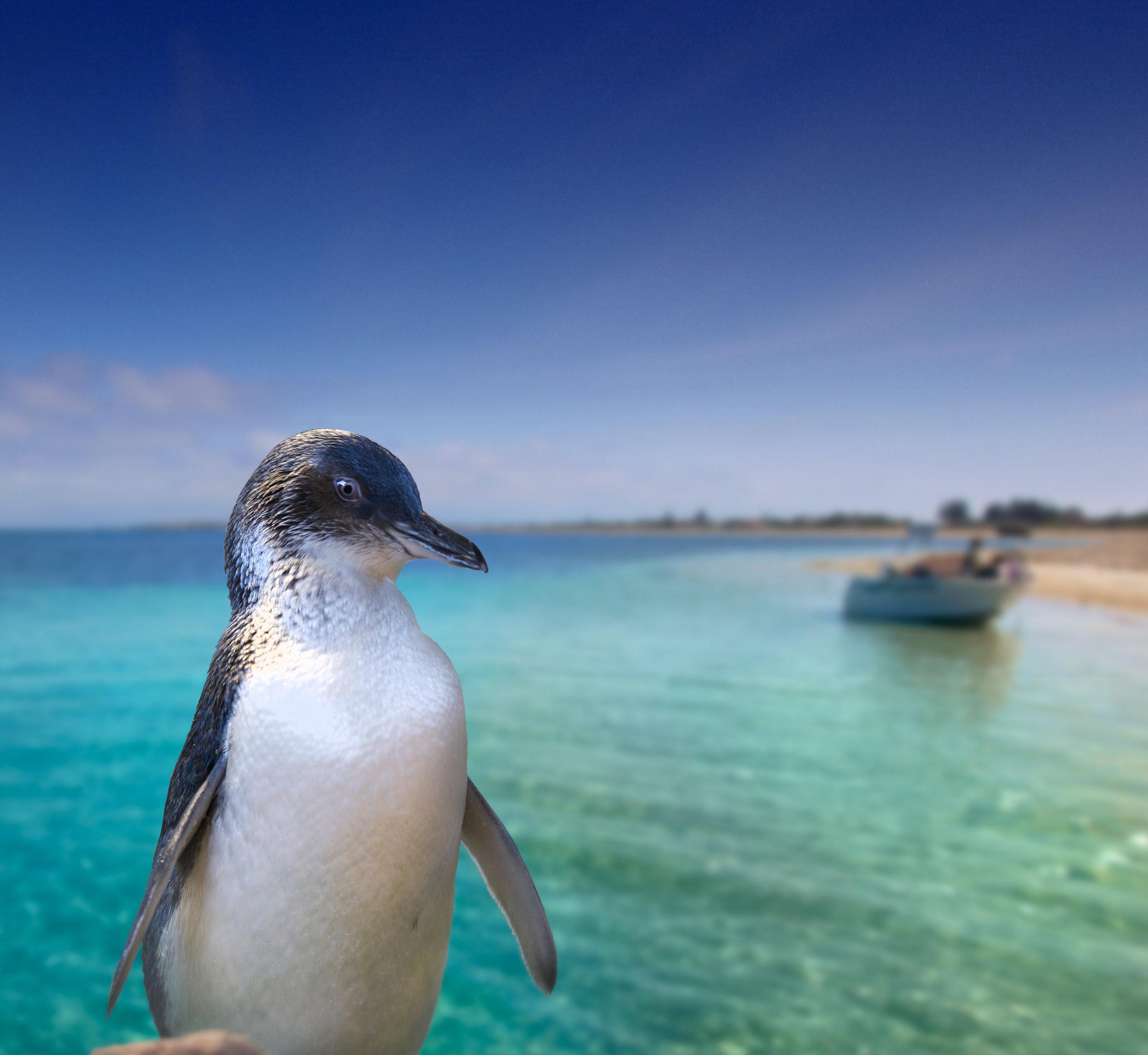 Rockingham-Wild-Encounters-penguin-landscape.jpg