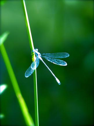 mosier_dragonfly_1.JPG