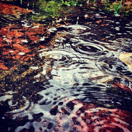 mosier_raindrops copy.jpg