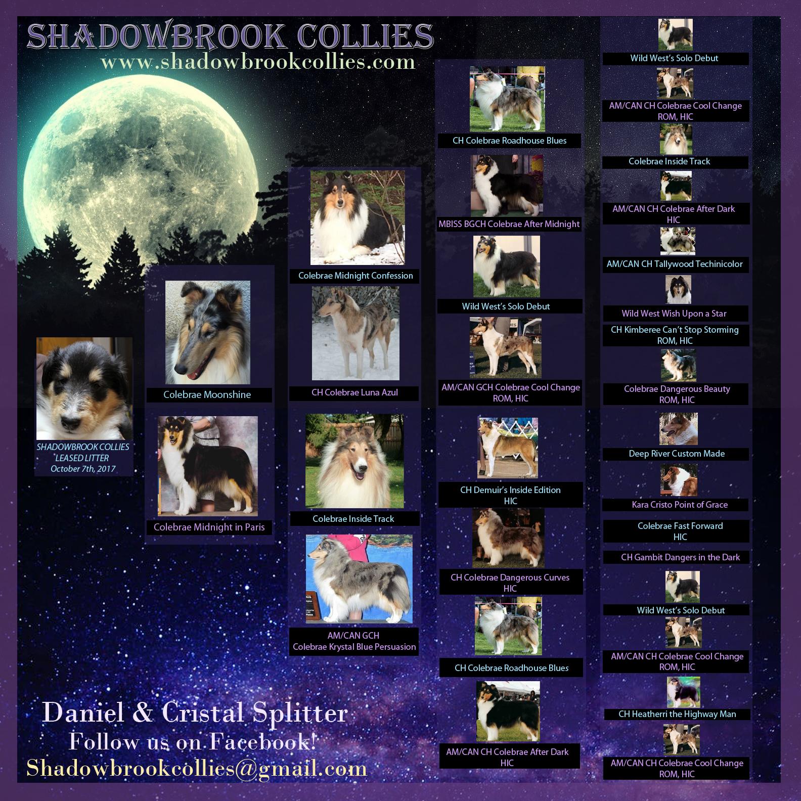 Advertisement Shadowbrook Puppies Pedigree.jpg