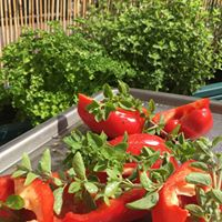 peppers and herbs.jpg