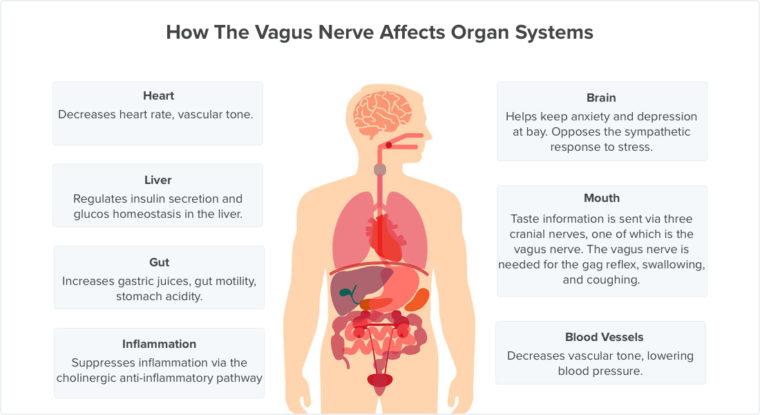 vagus-nerve-system-760x415.jpg