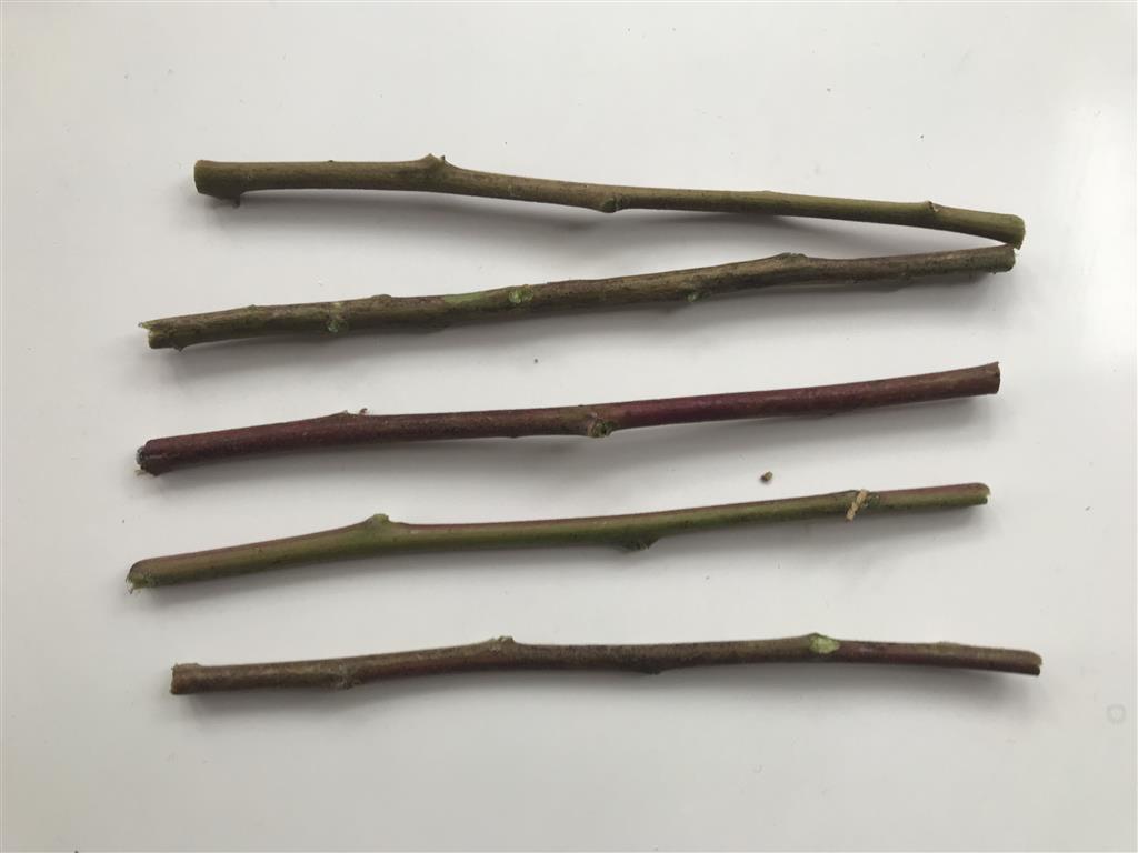 Step 1: Cut twigs the same length