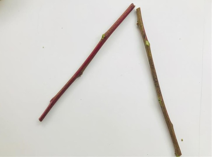 """Step 2: Place two twigs like an upside down letter V. Number the stick on the left """"1"""" and the stick on the right """"2""""."""