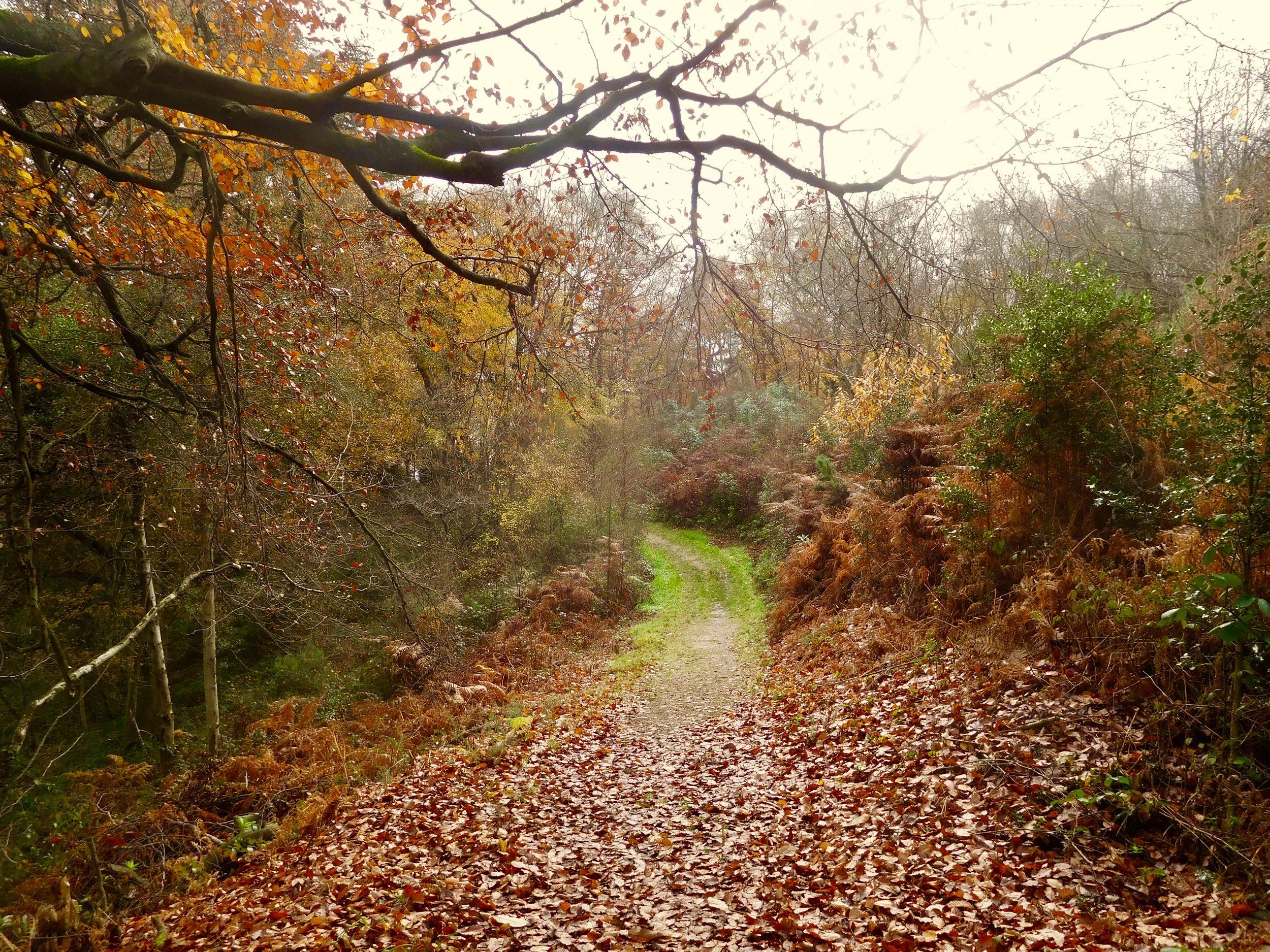 Autumn on Mariners Hill.