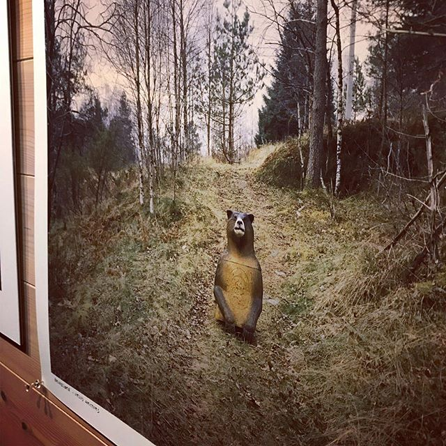 Bear in mind, 😉 the gallery is open this week-end, 12-17! 🐻 Showing @hskodvin 'A Jungle out There // #modul35 #photogallery #ajungleoutthere #helgeskodvin #photoexhibition