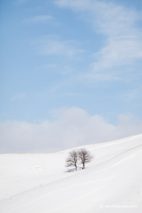 Trees in winter landscape, Hokkaido, colour version