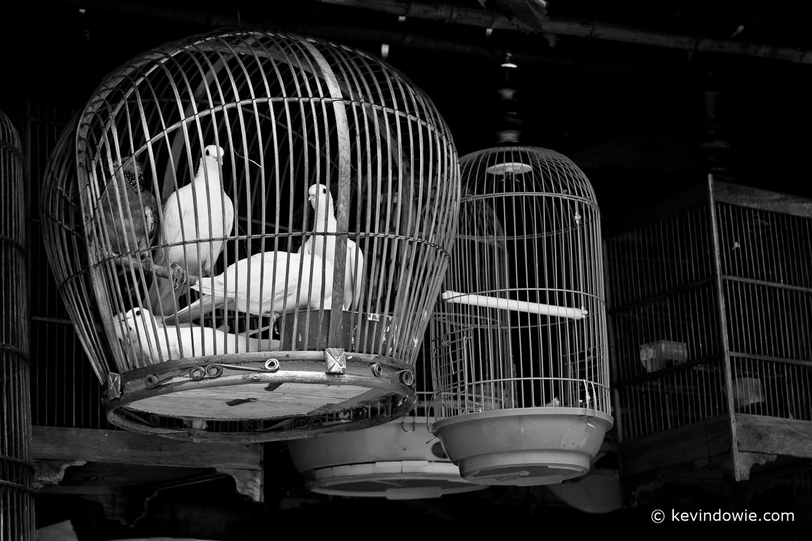 Pigeons in black and white, Jakarta, Indonesia, 2018.