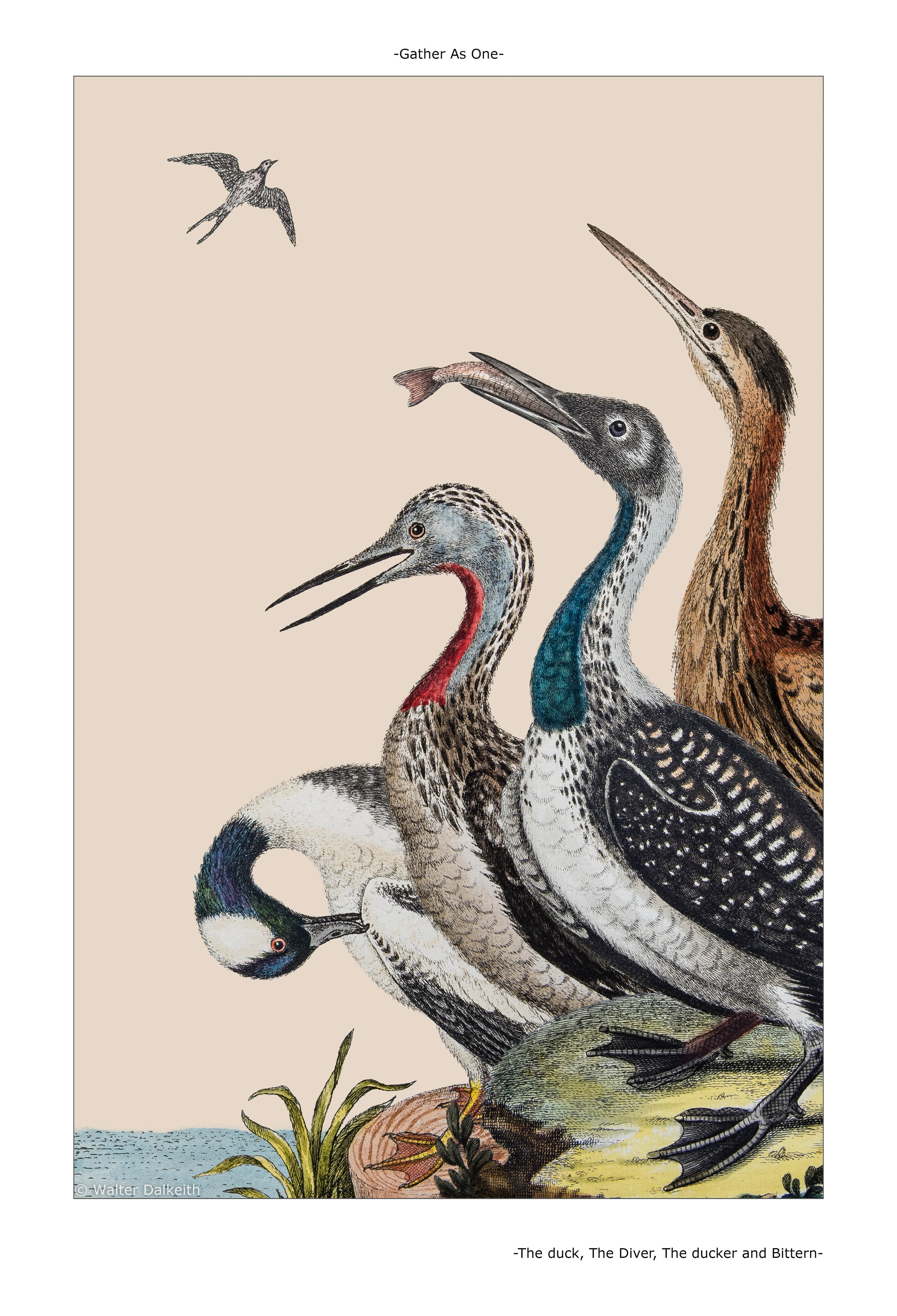 The duck, The diver, The Ducker and Bittern Main title.jpg