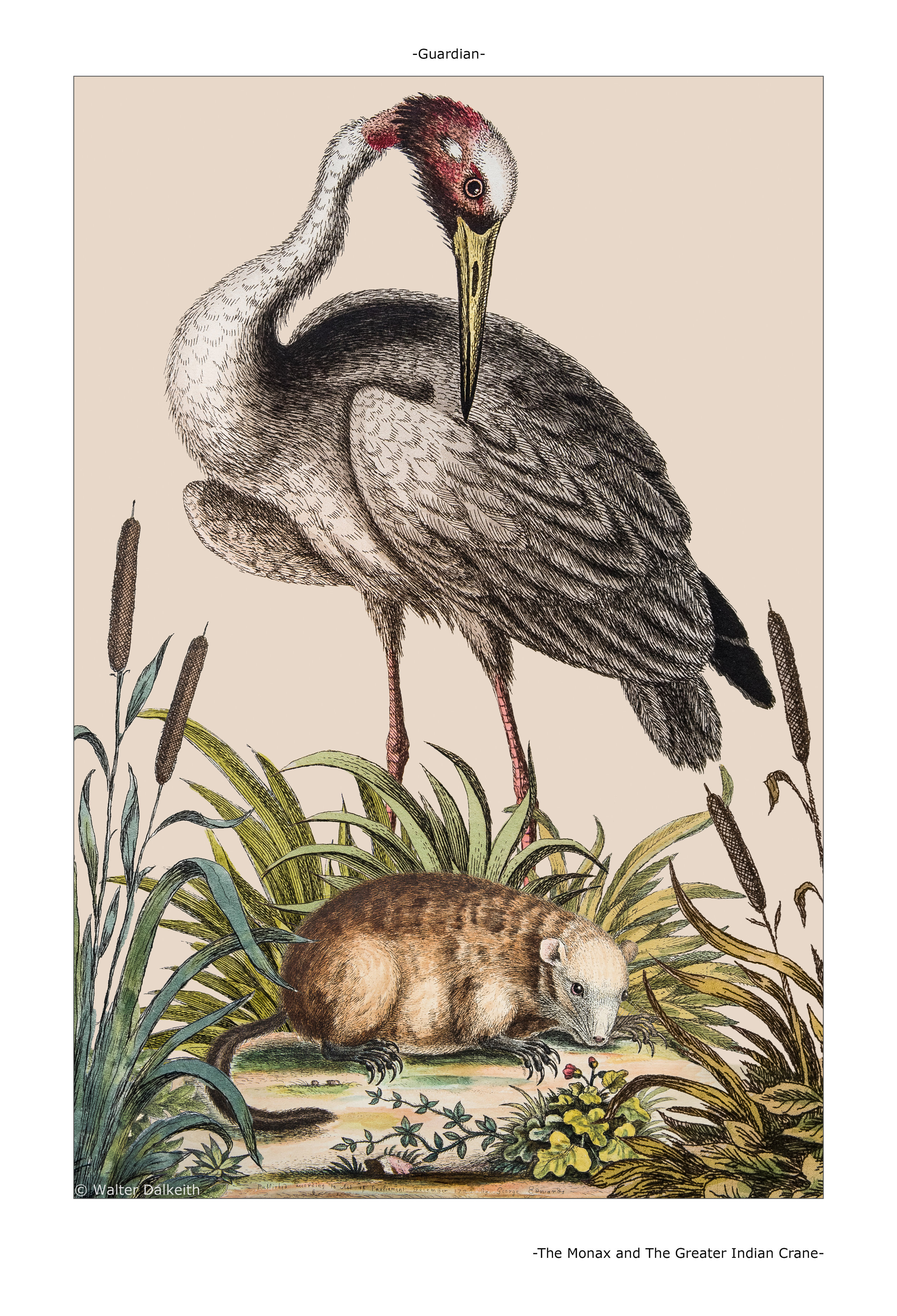 The Monax and the Greater Indian Crane Main title.jpg