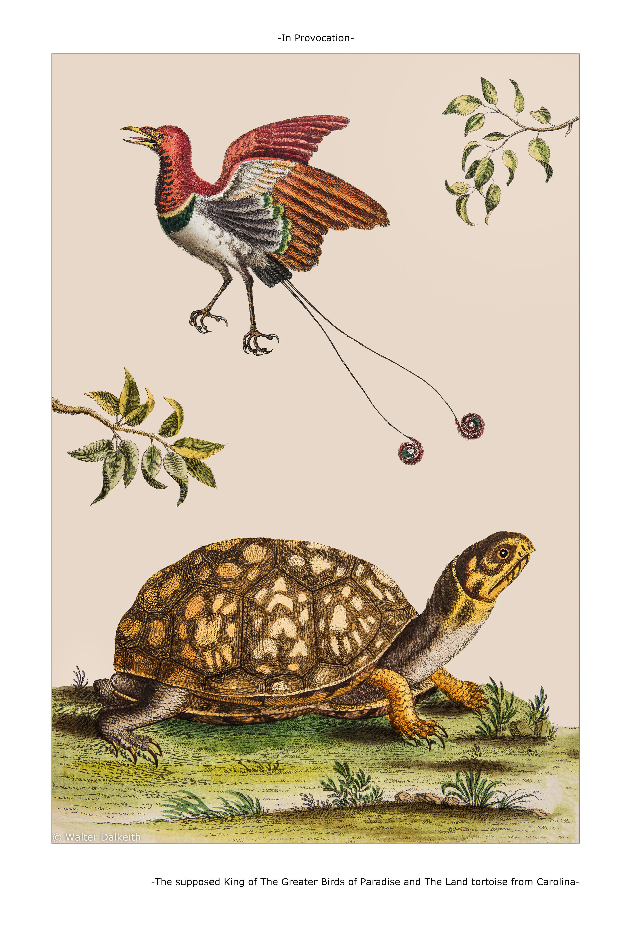The Supposed King of the Greater Birds of Paradise and The Land Tortoise from Carolina Main title.jpg