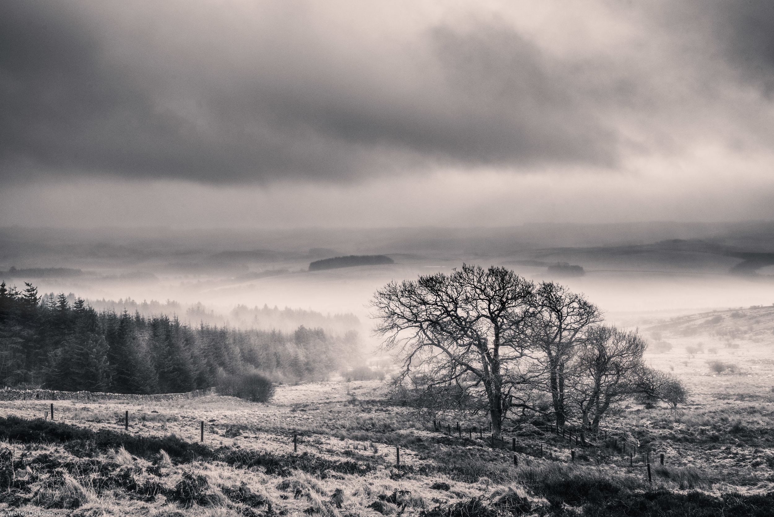 Shelter - Scotland 2018