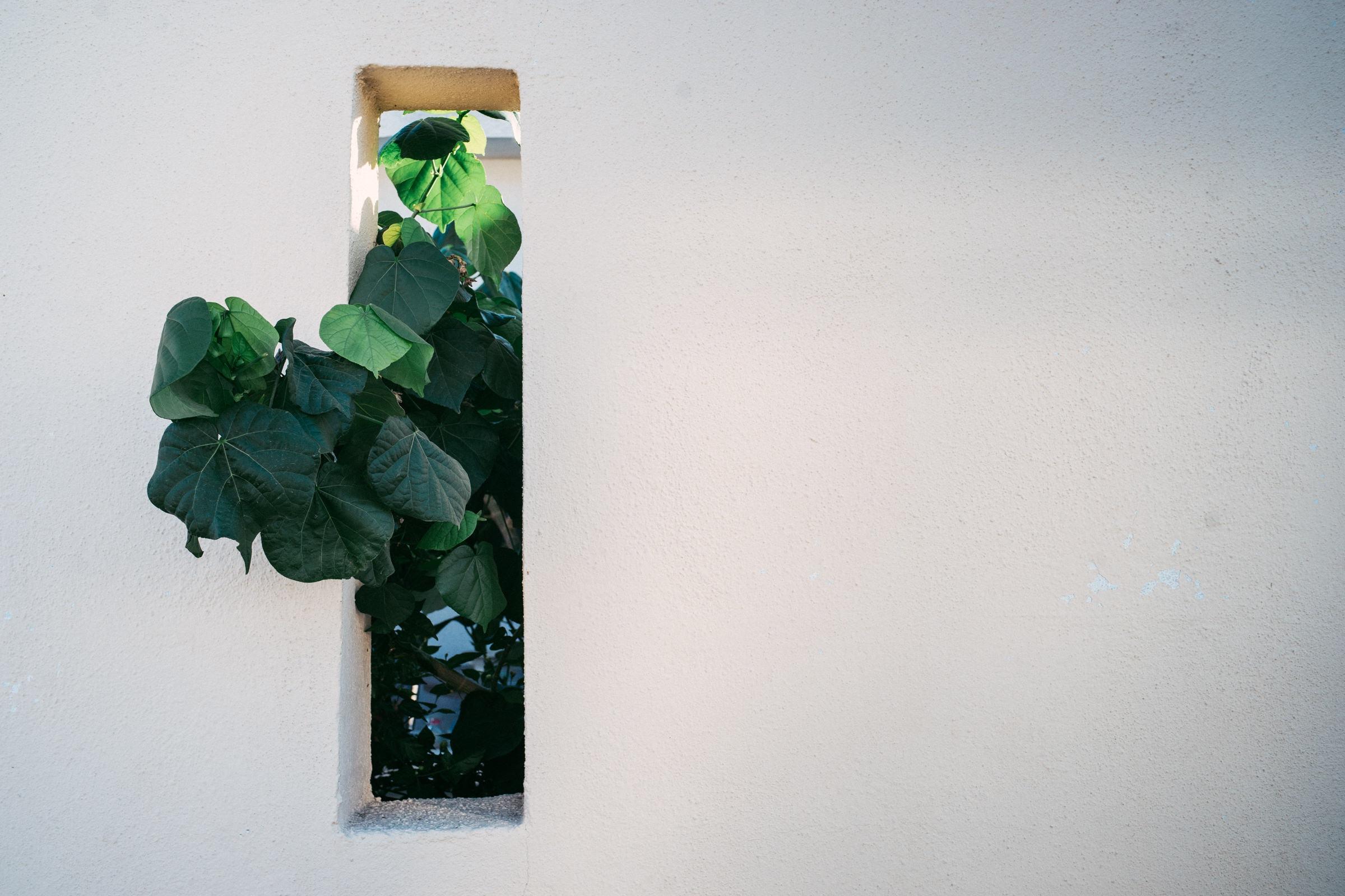 Insiders Guide to Oaxaca - www.letsregale.com 10.jpg