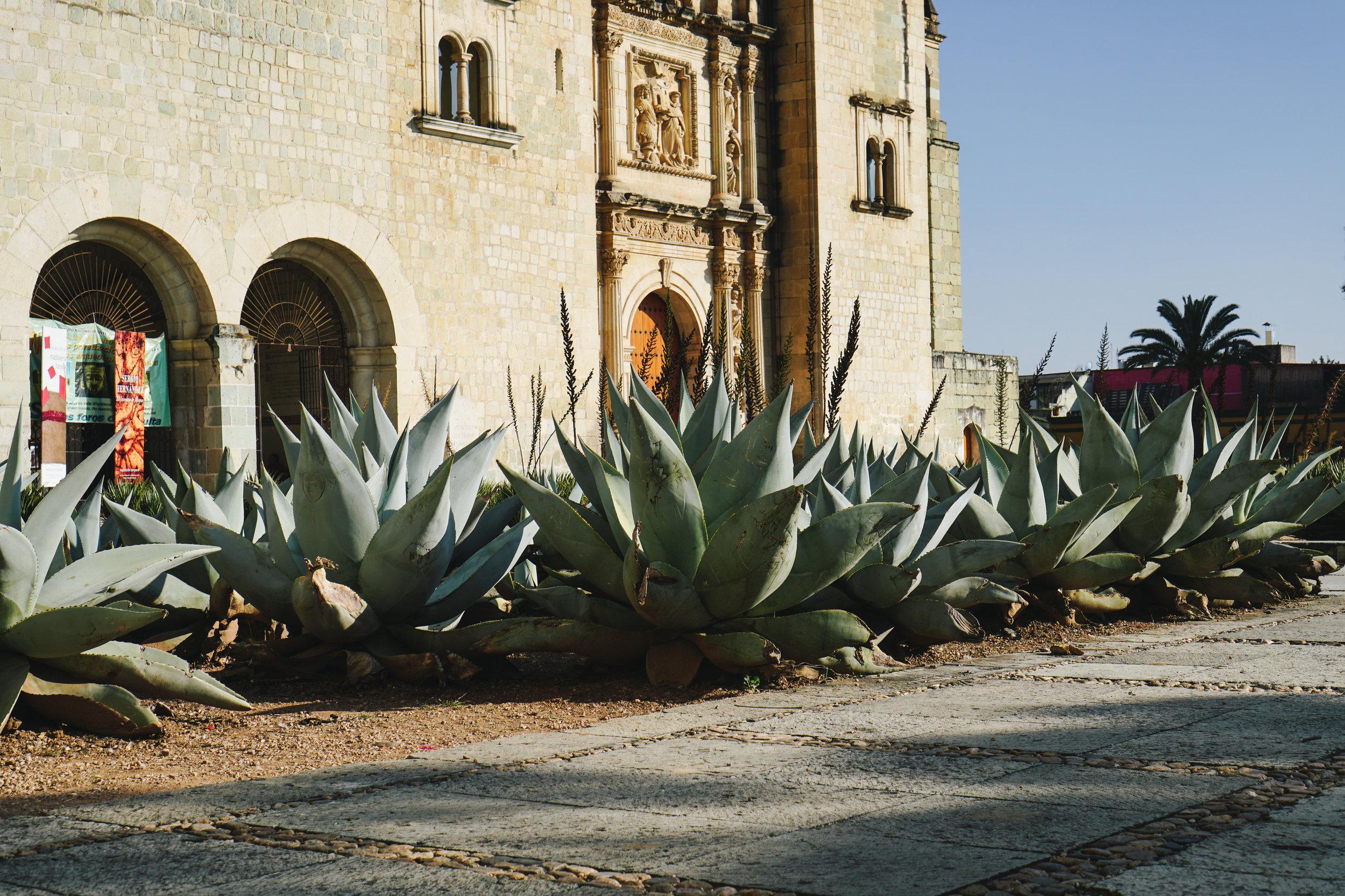 Insiders Guide to Oaxaca - www.letsregale.com 21.jpg
