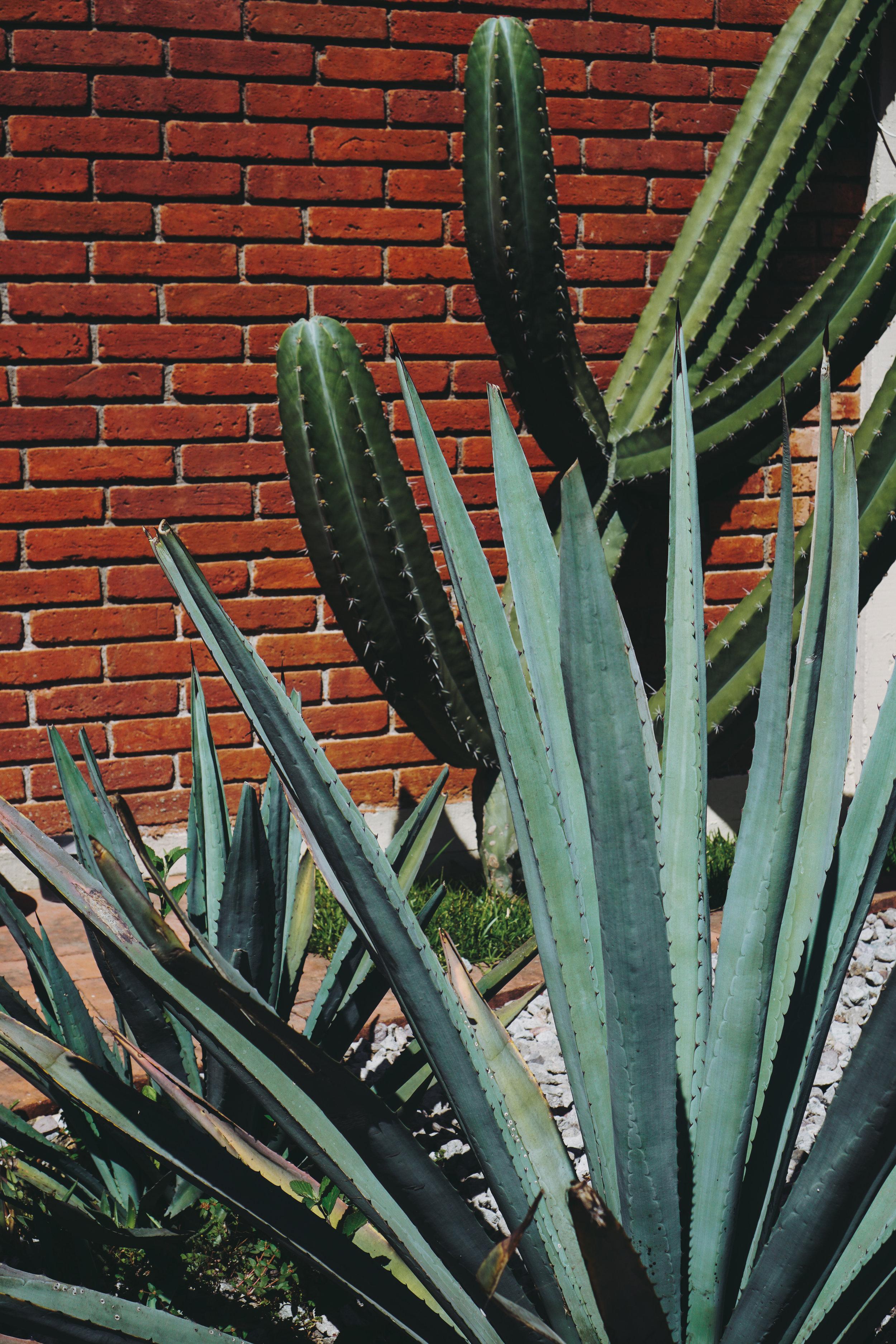 Insiders Guide to Oaxaca - www.letsregale.com 35.jpg
