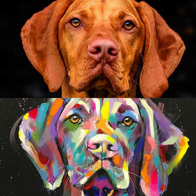 This was a Christmas commission of my friends #hungarianvizsla , an incredibly handsome boy 😍 they were delighted with  it...a great way to end 2018. Lots of exciting new things planned for 2019...keep an eye out here for updates!! 🤩 XX . . . . . . . . #contemporaryart #contemporary_art #contemporarypainting #petportrait #petportraits #petportraitartist #dogpainting #dogart #dogartist #hungarianvizslas #hungarianvizslasofinstagram #hungarianvizslasoftheday #vizla #vizlasofinstagram #vizlasarethebest #vizslasofinstagram #vizsla #viz