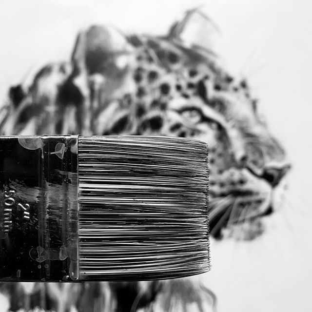 Big new shiny brush for my next challenge...loving working on a new wildlife series at the moment 🖤🐆 . . . . . . . #leopard #leopardprint #leopards #leopardart #wildlifeart #wildlifeartist #wildlifeconservation #protectwildlife #protectthewild #lovewildlife #acrylicbrush #paintbrush