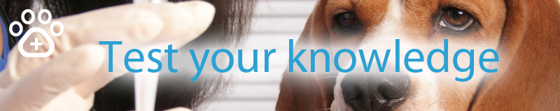 Lepto-vaccines-test-your-knowledge-banner.jpg