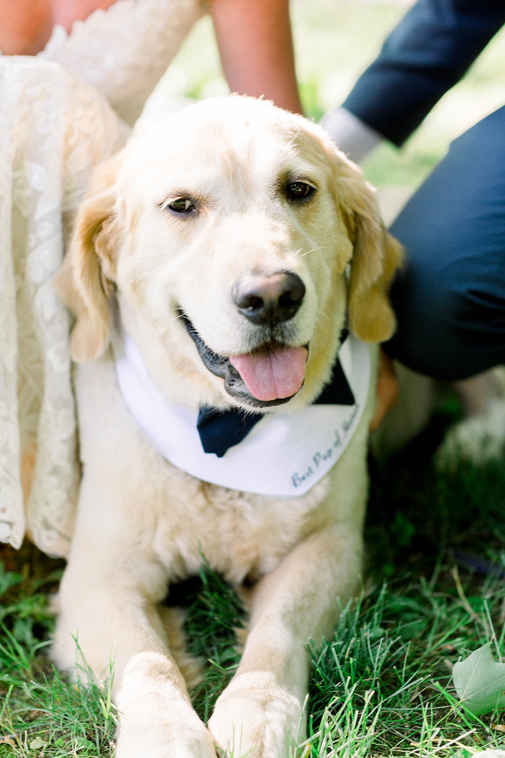 Wedding attire for your dog: Pittsburgh Botanic Garden wedding planned by Exhale Events. See more wedding inspiration at exhale-events.com!