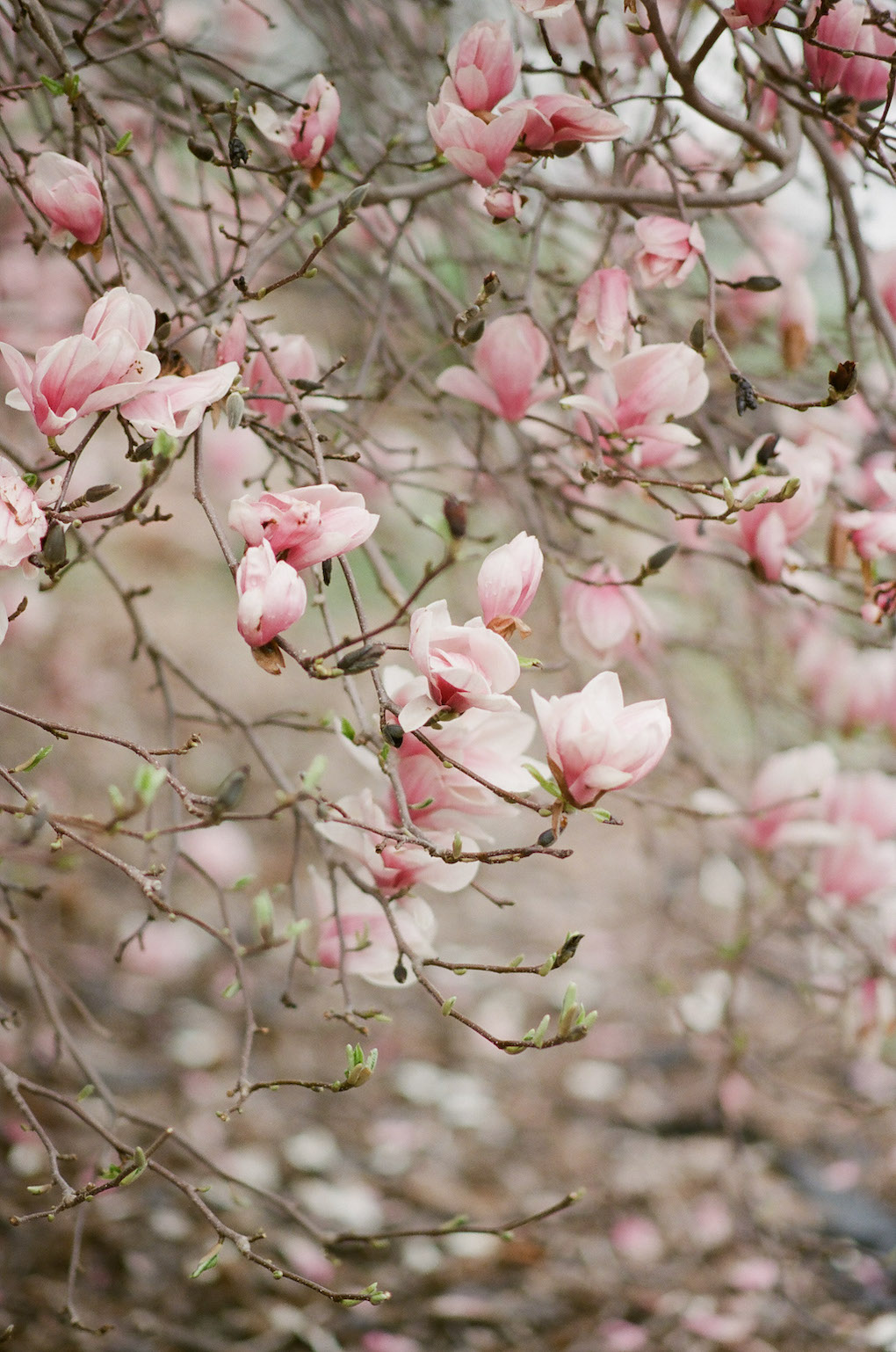 Magnolia Garden in Downtown Pittsburgh:Soft and Subtle Palettes of Spring Blossoms | Editorial Shoot at The Renaissance Pittsburgh by Exhale Events. See more inspiration at exhale-events.com!