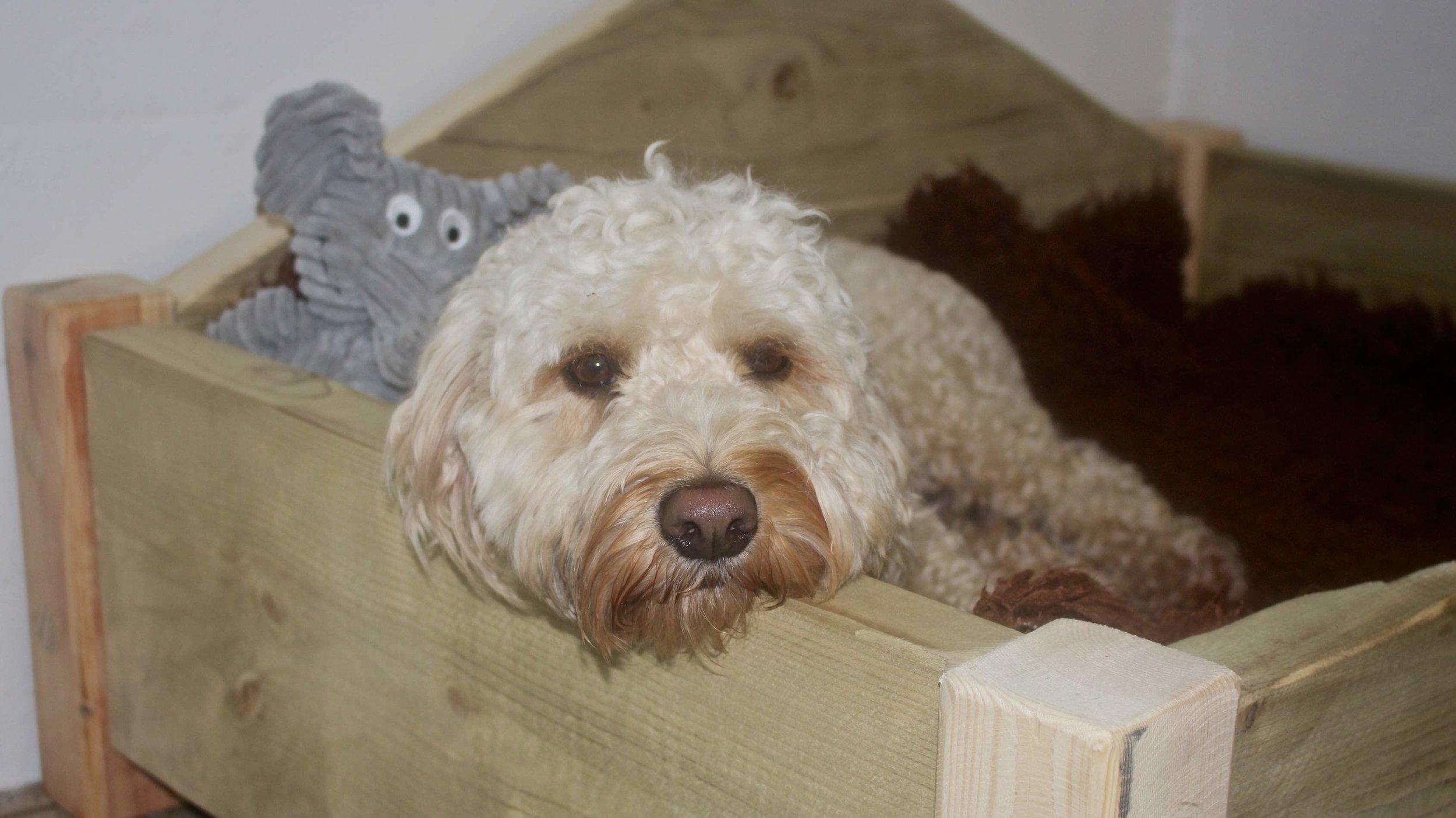 Toby in dog bed.jpg