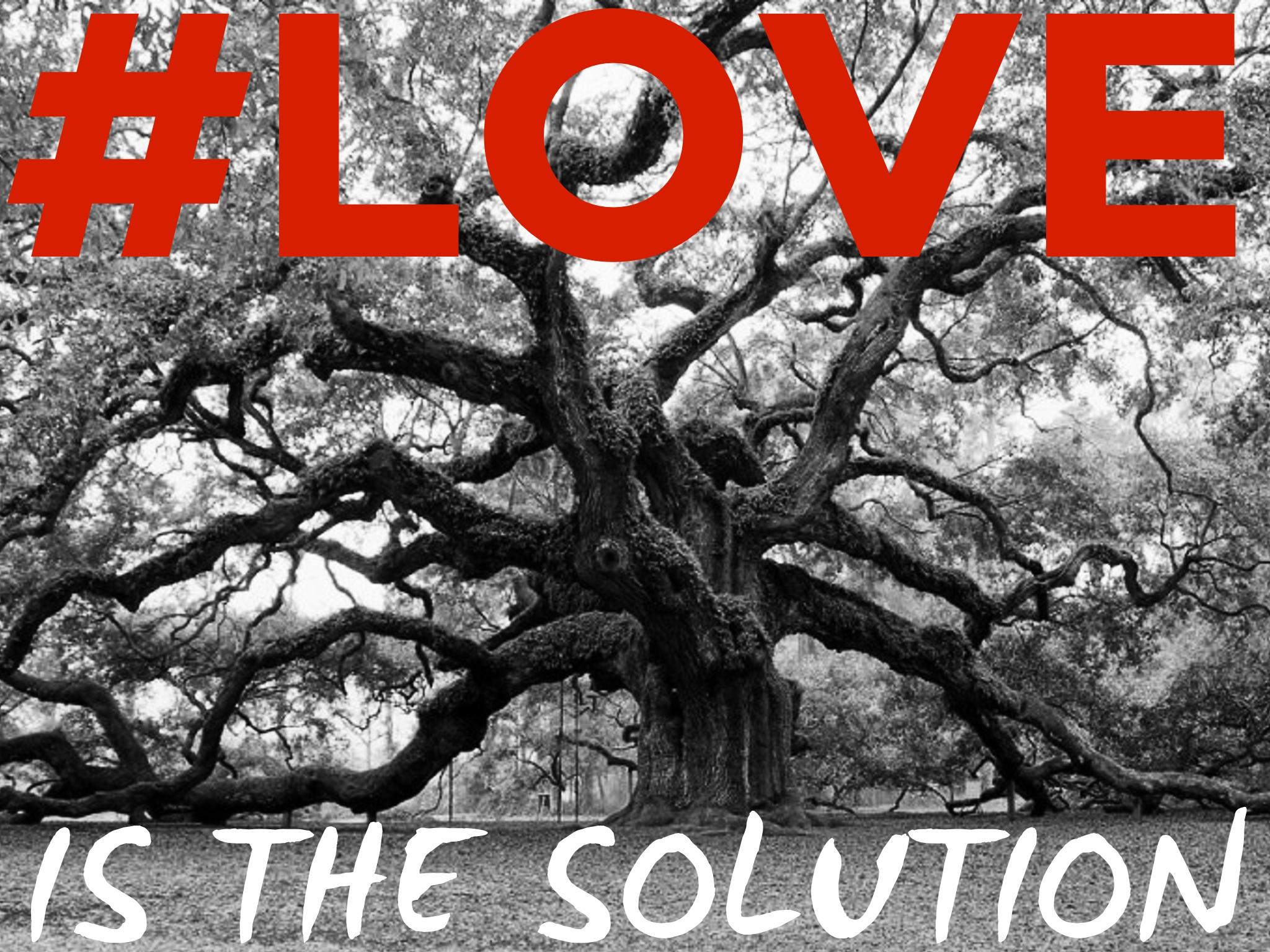 #LOVE giant oak tree - Dr Reese Halter.jpg