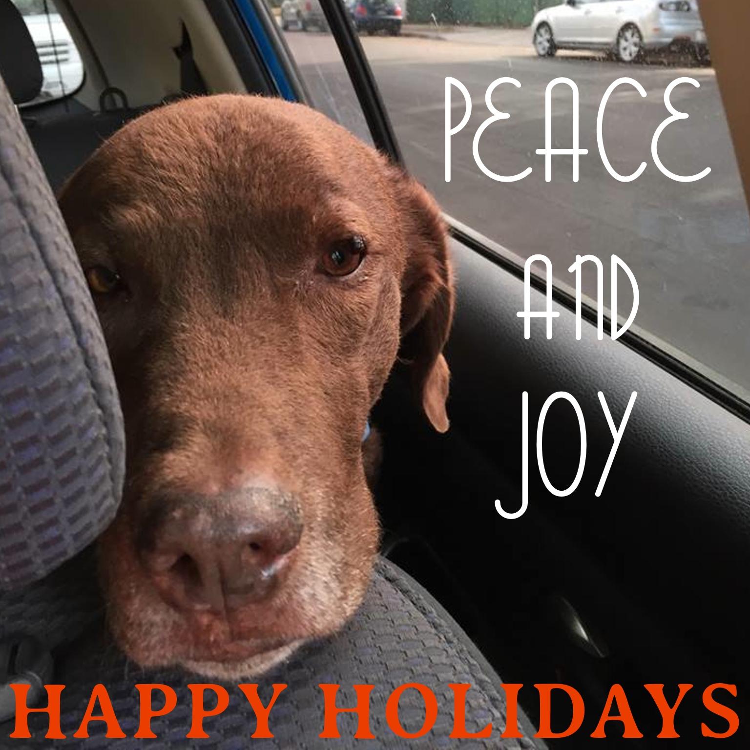 Naio holiday card - Dr Reese Halter.jpg