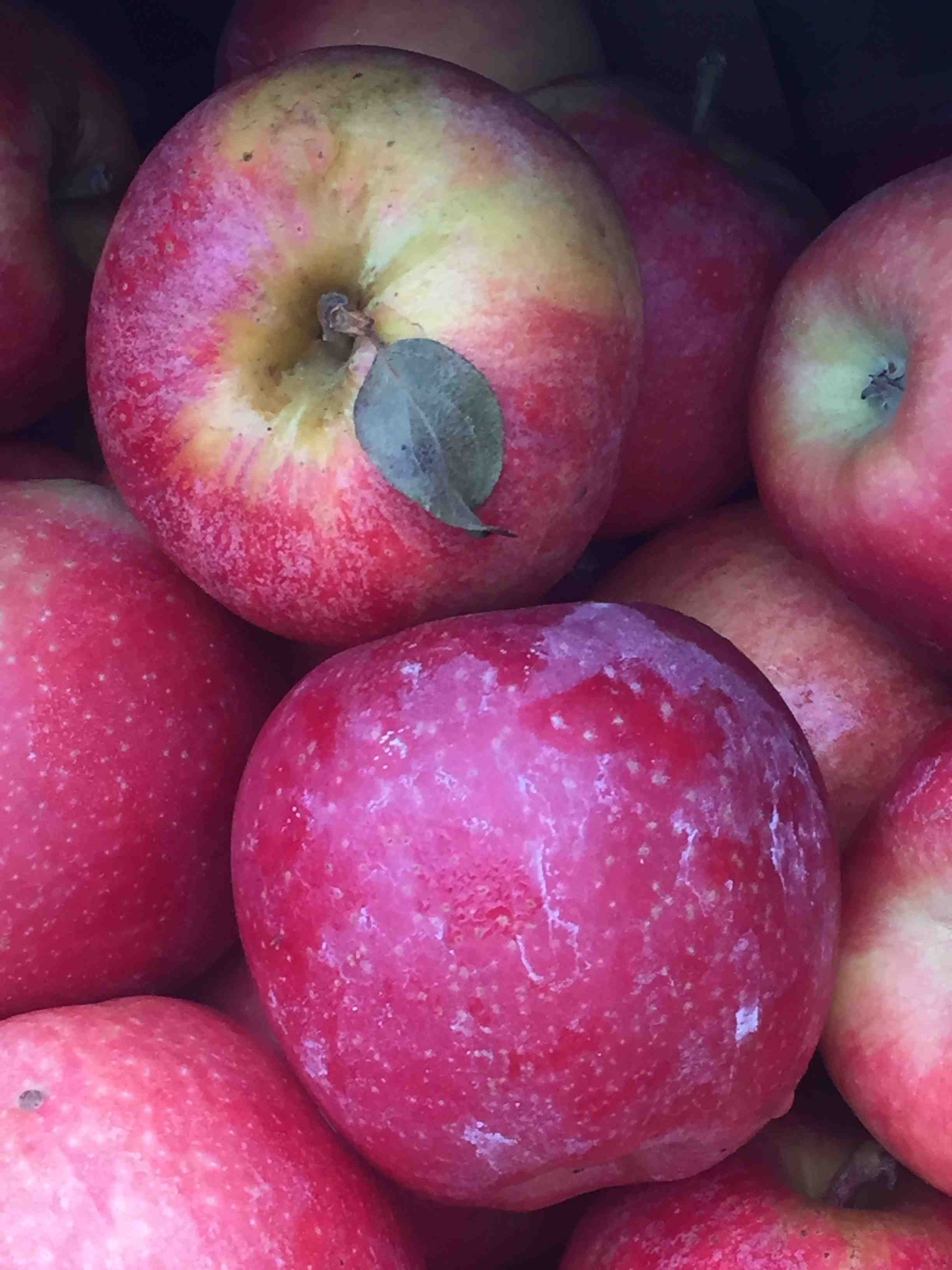 Apples - Reese Halter.jpg