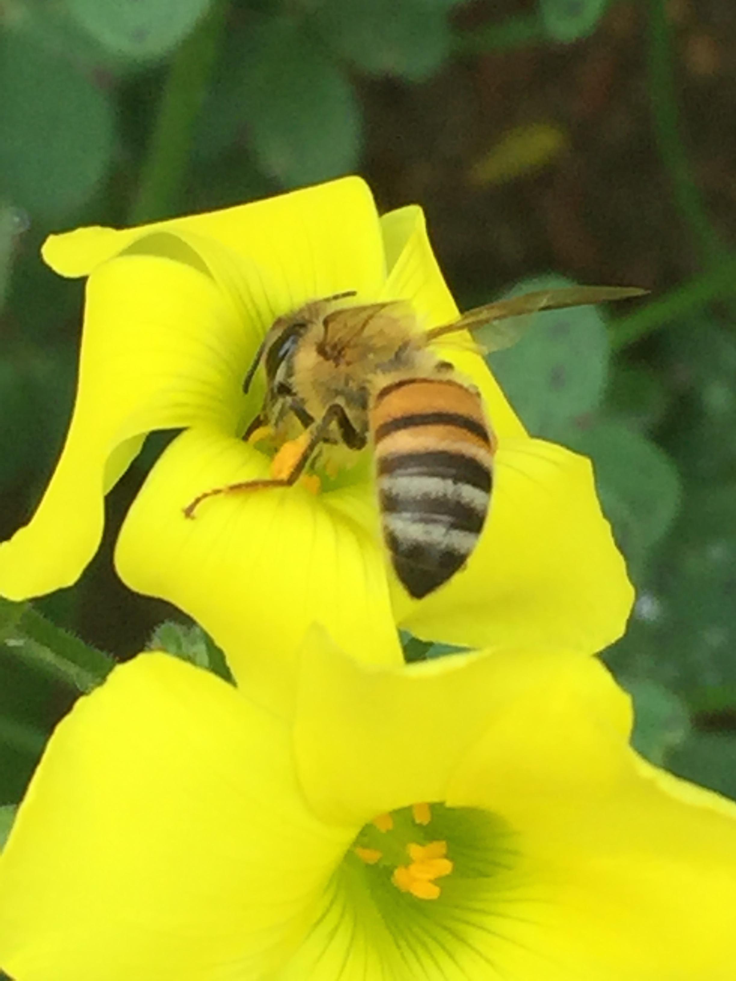 Honeybee Hollywood Hills - Reese Halter.jpg