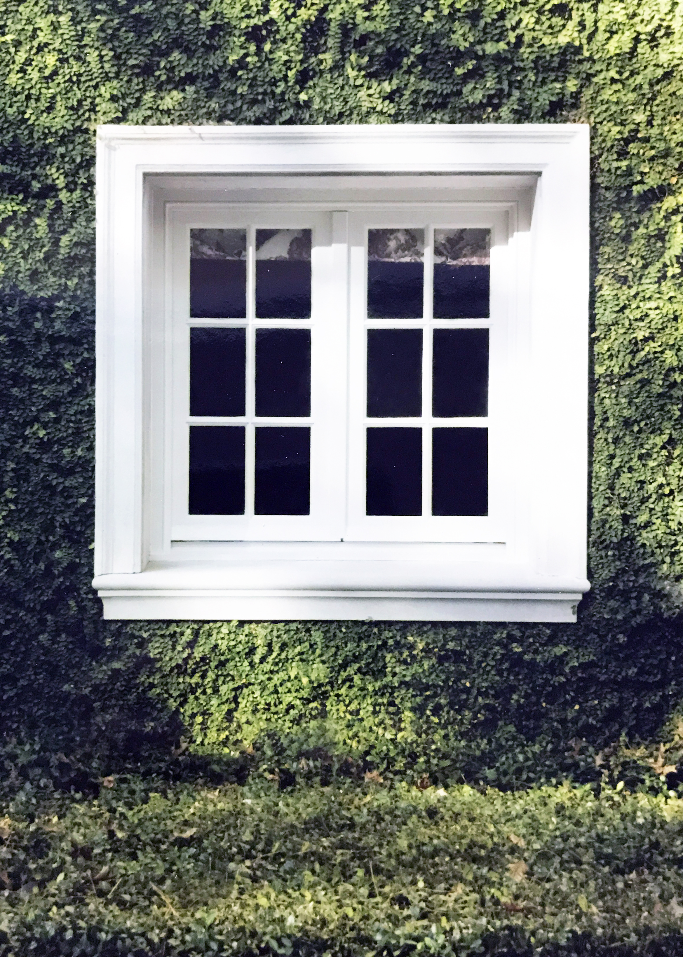 Window surrounded by ivy in a Parisian style home.
