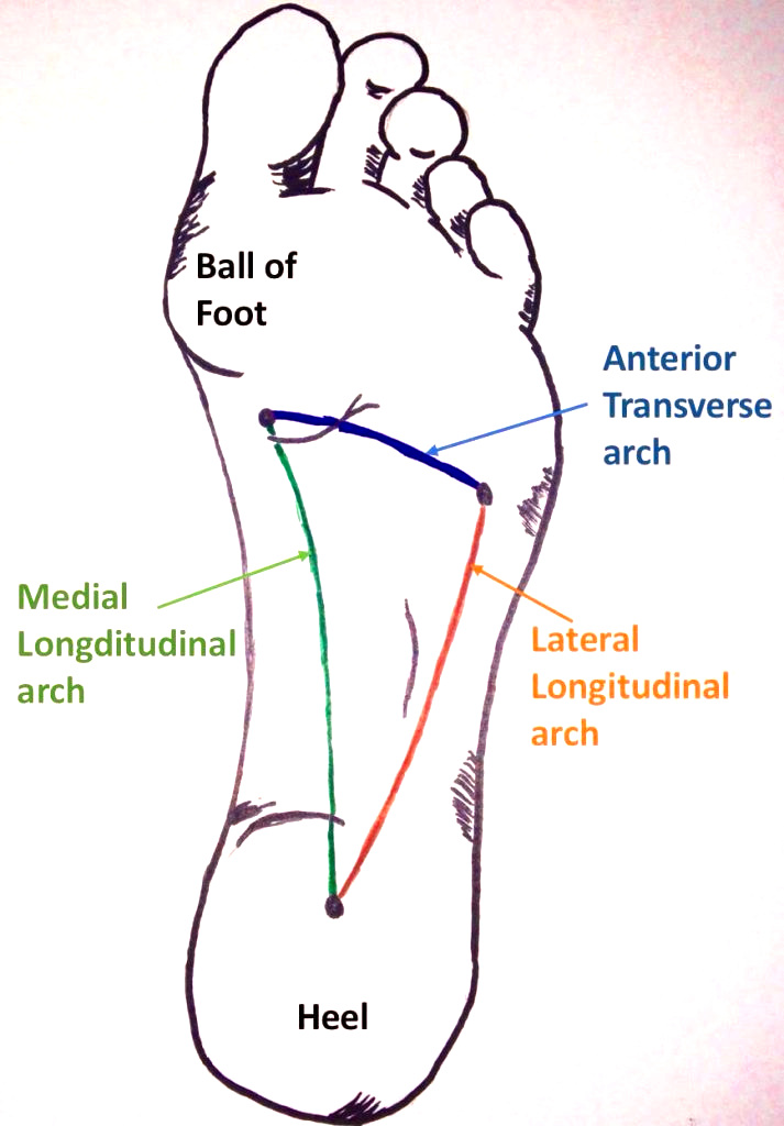 Overview-of-the-Arches-of-the-Foot-713x1024.jpg